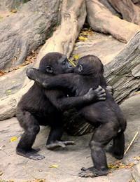 ayo berpelukan ,,,, hewan aja saling menyayangi , masa qta manusia kalah ma mereka ???? #nahloh