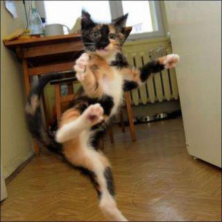 BRUTAL DUEL YOK seekor kucing ini jago dalam karate .. kalo gk percaya Duel WOW