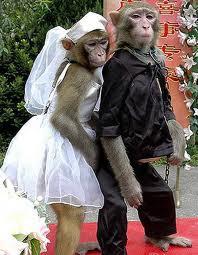 sepasang monyet pria & wanita menikah telah di jodohkan oleh bangsawan monyet klik WOW ya