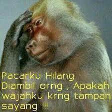 haha liat monyet nya bisa galau :D WOW nya dongg
