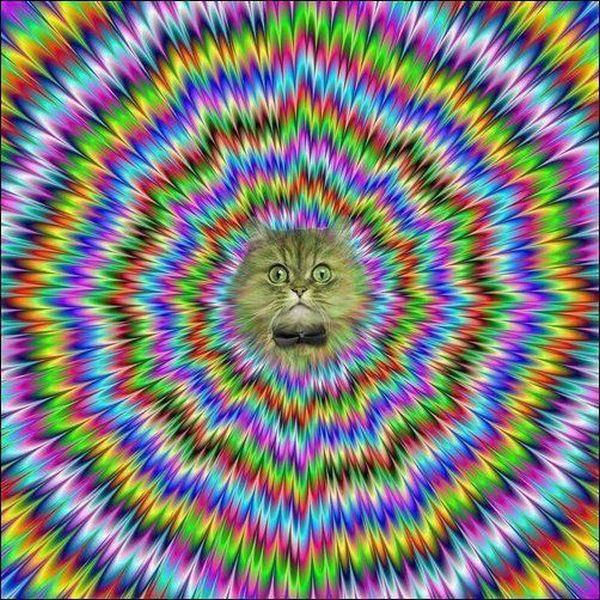 Tatap mata saya..... jadi jelek.. jelek.. jeleeekk.... waduh, saya emang gak bisa hipnotis •••