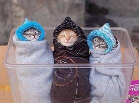 hahaahhah Kucing nya kedinginan