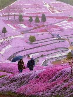ketika musim gugur tiba di Jepang