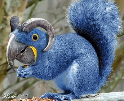 ini tupai badannya warna biru ,memiliki tanduk dan berkepala burung paruh bengkok wownya y
