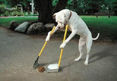 anjing ini tau diri... setelah poop dia bersihkan sendiri...