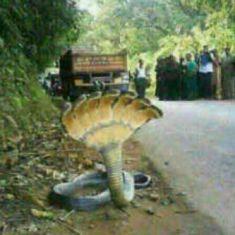 ular berkepala tujuh lagi-lagi membuat heboh warga Makassar, Sulawesi Selatan (Sulsel). Bilang Wow ya :)