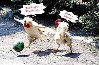 Neh dia gambar ayam sedang main bola mengikuti gaya pemain di champion 2012