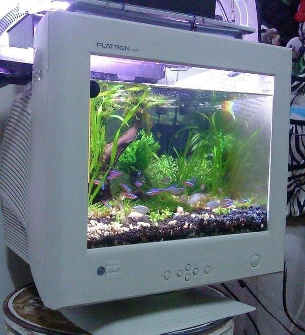WOW hebat dan unik nih aquarium di dalam layar komputer