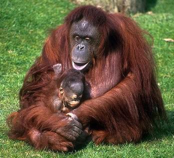 10 Hewan Terlangka di Indonesia