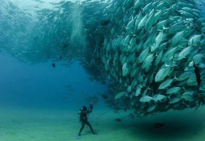 ayo Ikan- Ikan senyum dong, mau di photo nih pake kamera ? Samsung Smart Camera Indonesia