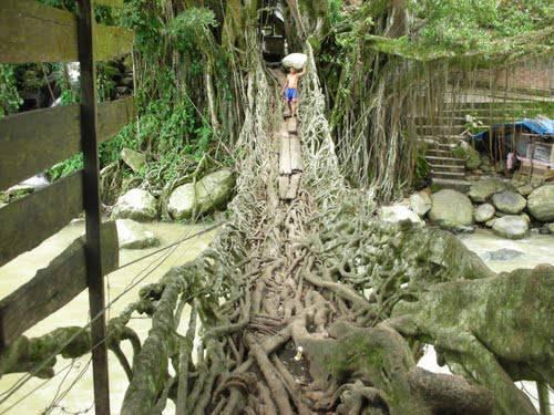JEMBATAN AKAR di Sumatera Barat