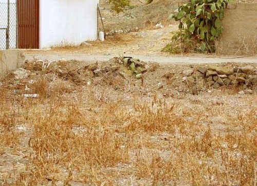 Siapa yang matanya masih normal??? cri seekor kucing di gambar ini?#Asli ngezoomSampe gede baget...