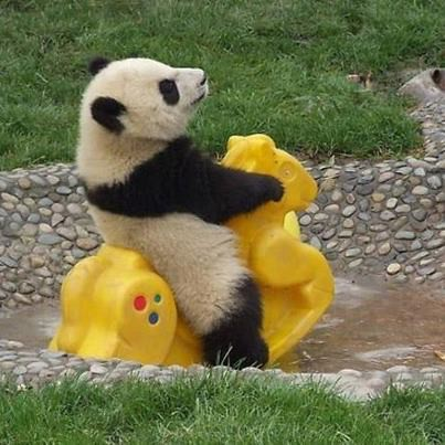 It enjoys riding it very much~WOW