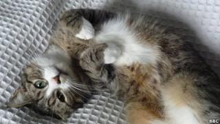 Kucing adalah ancaman terbesar bagi fauna liar di AS dan membunuh miliaran hewan setiap tahun, kata sebuah penelitian. Peneliti memperkirakan kucing bertanggung jawab pada kematian antara 1,4 hingga 3,7 miliar burung dan 6,9-20,7 miliar mamalia