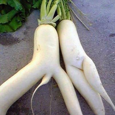 Inilah Sayur Lobak Paling Sexy Di Duniasepasang Kekasih
