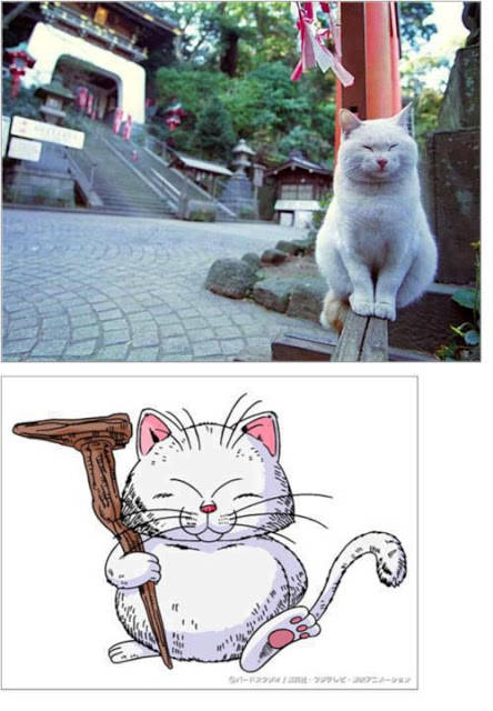 real master Korin from Dragon Ball Z !! :D Woww