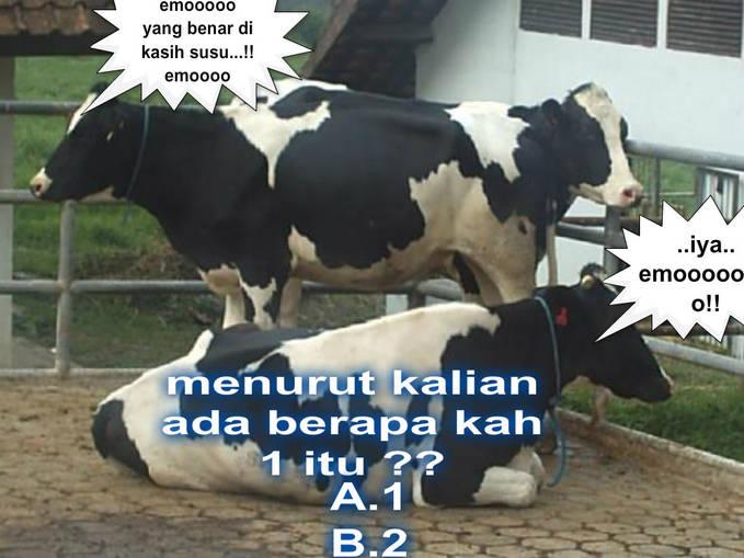 kalo benar di kasih susu sapi ,,sama Baso sepuasnya ....!! jangan lupa WoW nya ya .... udah benar sama bilang WoW ..di kasih /Susu Sapi , Bakso , Pulsa 5000....!!