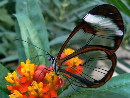 Kita seperti kupu-kupu yang bergetar sepanjang hari dan berpikir itu adalah selamanya. -Carl Sagan