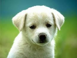 klik wownya donk kasian anjingnya lagi galau nunggu wow dari kalian