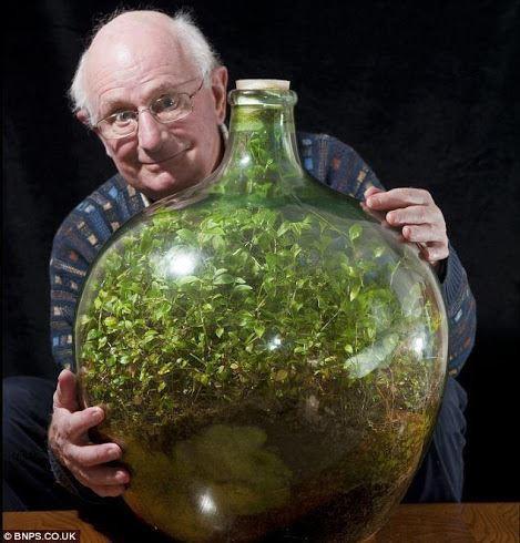 Tau nggak, tanaman dalam botol ini udah tertutup rapat & terisolasi dari dunia luar selama 40 tahun lho. Tapi tanaman ini masih hidup dan tumbuh subur di dalam botol cuma mengandalkan cahaya matahari yang masuk. klik WOW yang ter inspirasi