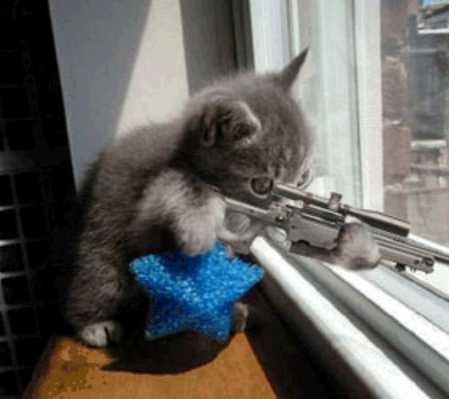 Kucing densus88,teroris,atau lagi kelaperan pengen nembak tikus??