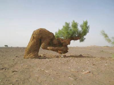 subhanallah, pohon ini ruku, dan daun pada pohon itu berbentuk lafadz allah