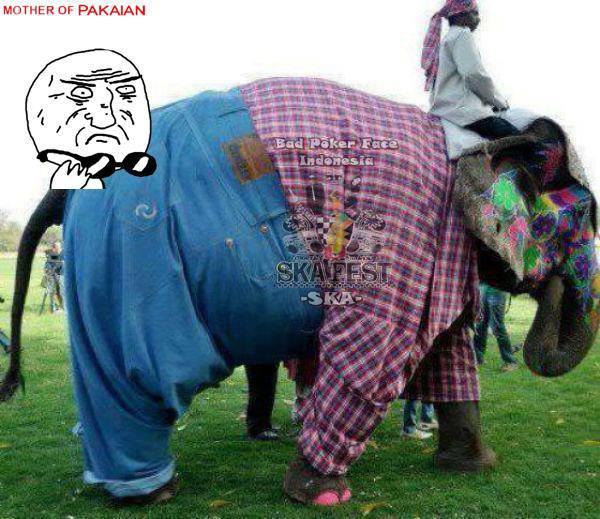 ada ada aja gajah pake baju