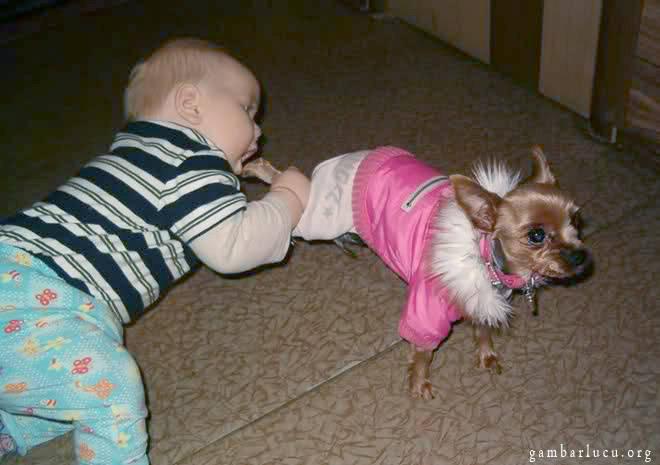 eh kebalik bukannya seharusnya anjing gigit kaki bayi loh kok malah bayi yang gigit kaki bayi wkwkwkwkkwkwkwk