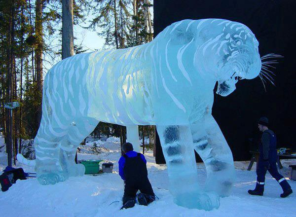 Wow..ice tiger