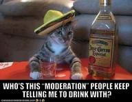 gambar kucing lucu yang memakai topi didepannya ada gelas dan minuman,mungkin dianya lagi galau ditinggal kekasihnya, yah seperti halnyamanusia jika ditinggal sang kekasih pasti rasanya galau,sedih,serba salah dan bahkan sampaisetres. wallpape