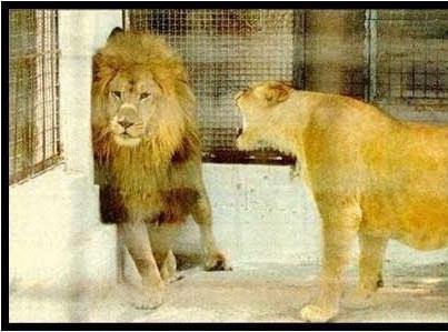 Cewek yang lagi marah kadang lebih menakutkan daripada cowok. Bener nggak sih? :P
