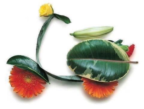 flower..........