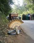 ular berkepala 7