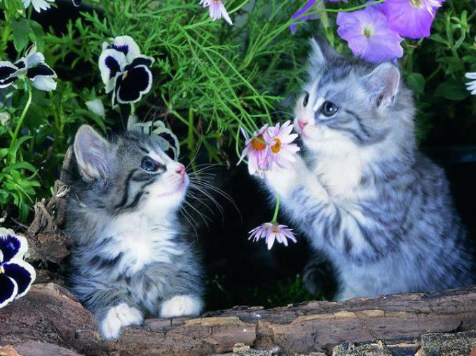 do you like a flower? | No, puss like flowers,*meaw* ^_^