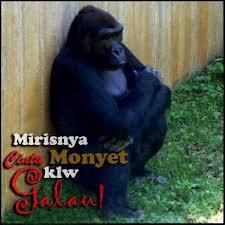 Mirisnya Cinta Monyet Kalau Galau