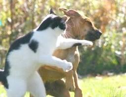 hayo siapa brani lawan kucing ini,,,,,,,,,,,,,,, WOW