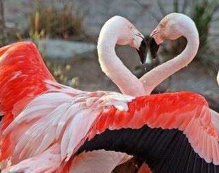wiihh saking cinta nya kepala na sampai berbentuk love yaaa...