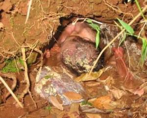 misteri bayi muncul dari tanah Kejadian ajaib ini berlaku di Bangladesh apabila seorang lelaki yang berjalan dikawasan itu terkejut apabila terlihat seorang bayi dari dalam tanah.