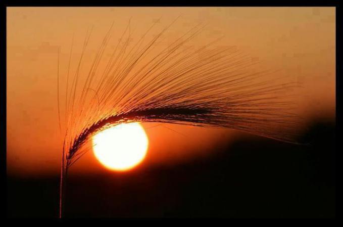 Sunset yang menyerupai mata. Alisnya menggunakan sehelai rumput kering.