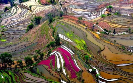 ini nyata lo, bukan lukisan .. saking indahnya kaya lukisan yaa.. (Rice Field Terraces in Yunnan, China)
