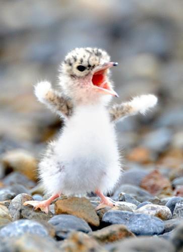 hooahmm,, Baru bangun tidur badan langsung seger :D kaya burung yang ada di fhoto itu :)....