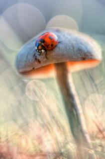 Foto Makro Yang Indah - seekor kumbang yang berada diatas jamur. Pencahayaan yang sempurna