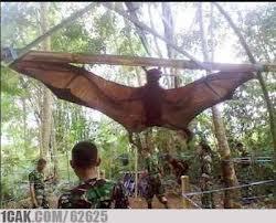 Inilah kelalawar terbesar se asean... di temuakan di tengah hutan oleh para tentara