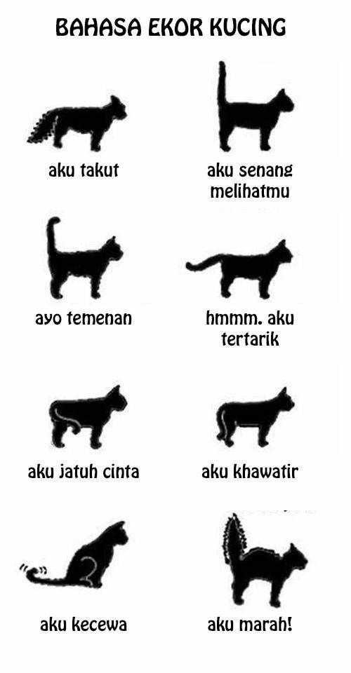 Bahasa ekor kucing