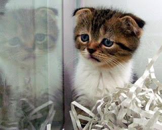 kasihan nih kucing, kayanya lagi galau nih, siapa yang setuju klik wow......