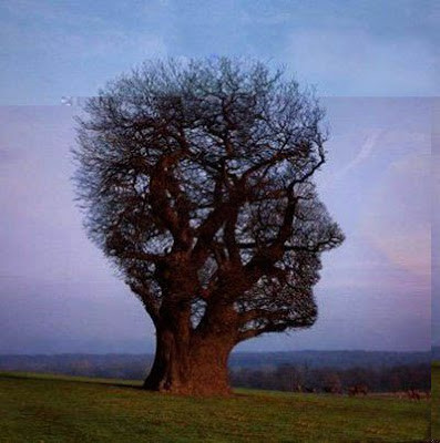 pohon yg unik berbentuk seperti sebuah kepala manusia