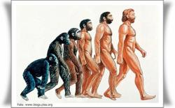 asal usul manusia