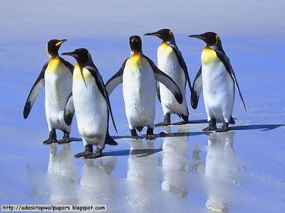 Penguin Lucu ^_^