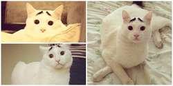 Sam, Kucing Yang Jadi Selebriti di Instagram Karena Memiliki Alis
