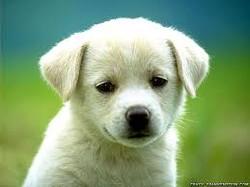 #Terciptanya Anjing dan Asal-usul Mengapa Anjing Jadi Najis#
